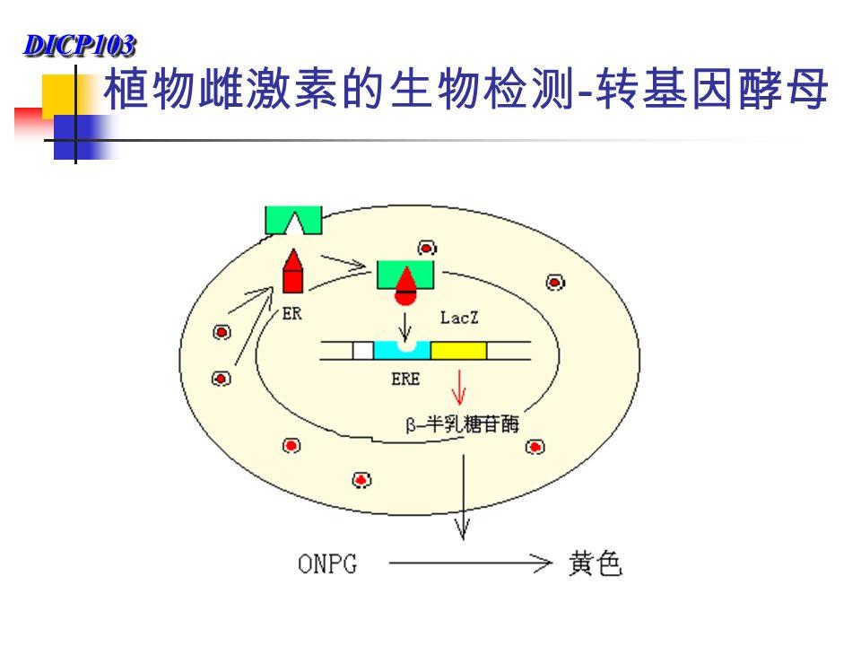 DICP103DICP103 植物雌激素的生物检测 - 转基因酵母