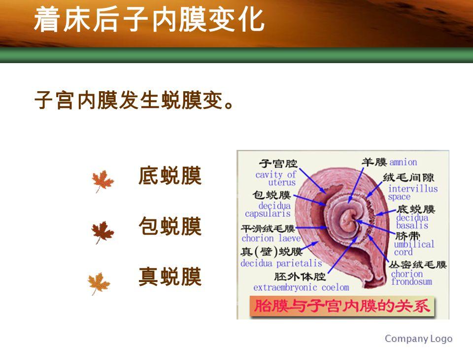 Company Logo 着床后子内膜变化 子宫内膜发生蜕膜变。 底蜕膜 包蜕膜 真蜕膜