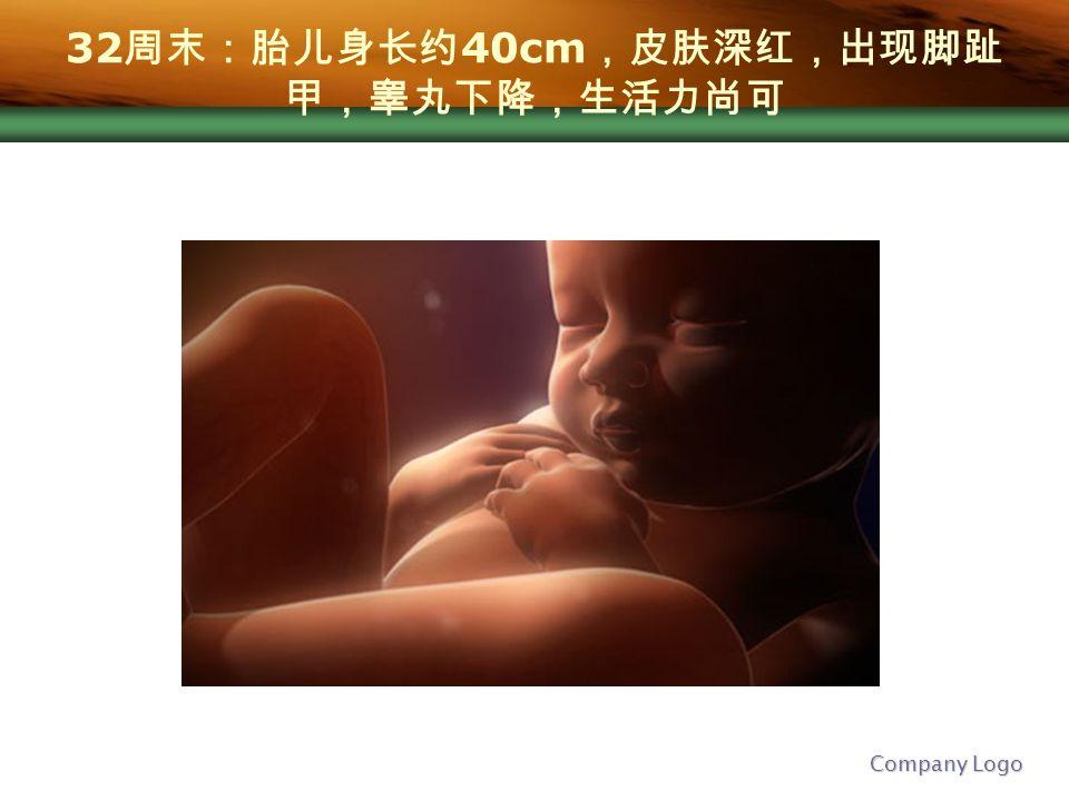 Company Logo 32 周末:胎儿身长约 40cm ,皮肤深红,出现脚趾 甲,睾丸下降,生活力尚可