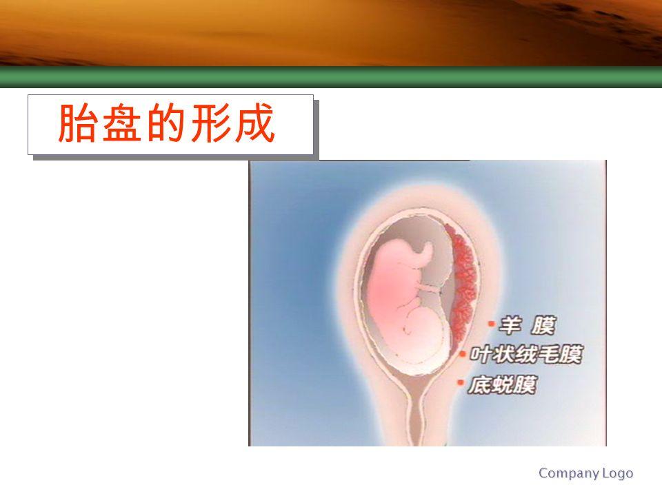 胎盘的形成