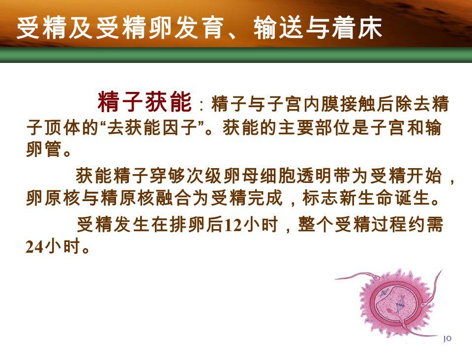 Company Logo 精子获能 :精子与子宫内膜接触后除去精 子顶体的 去获能因子 。获能的主要部位是子宫和输 卵管。 获能精子穿够次级卵母细胞透明带为受精开始, 卵原核与精原核融合为受精完成,标志新生命诞生。 受精发生在排卵后 12 小时,整个受精过程约需 24 小时。 受精及受精卵发育、输送与着床