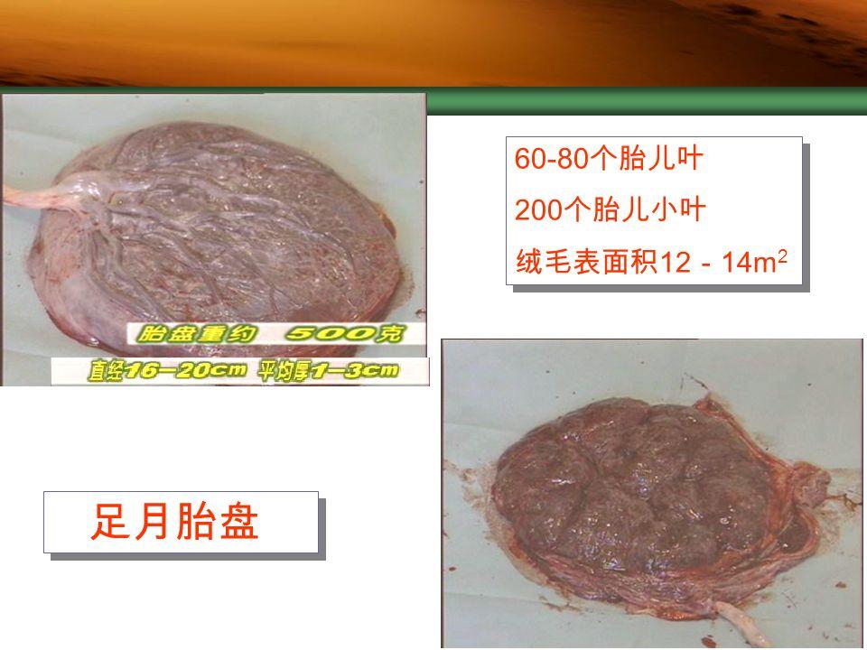 Company Logo 足月胎盘 60-80 个胎儿叶 200 个胎儿小叶 绒毛表面积 12 - 14m 2 60-80 个胎儿叶 200 个胎儿小叶 绒毛表面积 12 - 14m 2