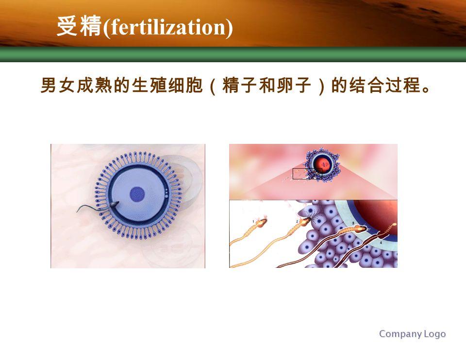 Company Logo 受精 (fertilization) 男女成熟的生殖细胞(精子和卵子)的结合过程。