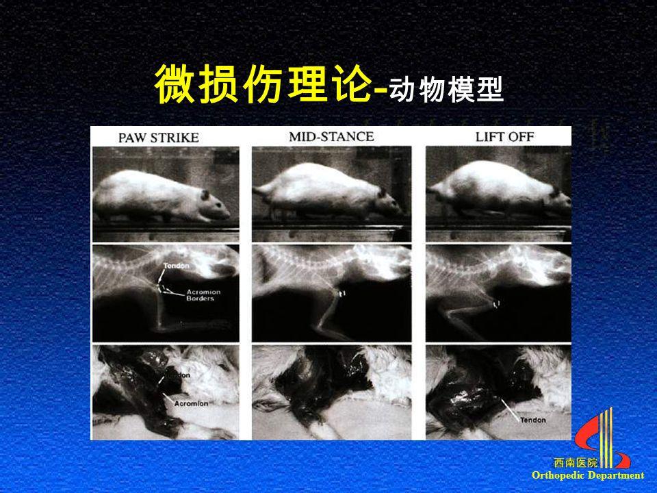 Orthopedic Department 微损伤理论 - 动物模型