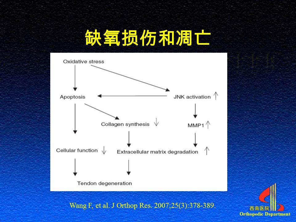 Orthopedic Department Wang F, et al. J Orthop Res. 2007;25(3):378-389. 缺氧损伤和凋亡