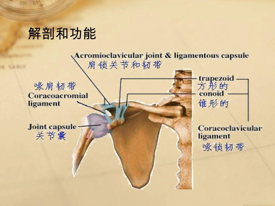解剖和功能