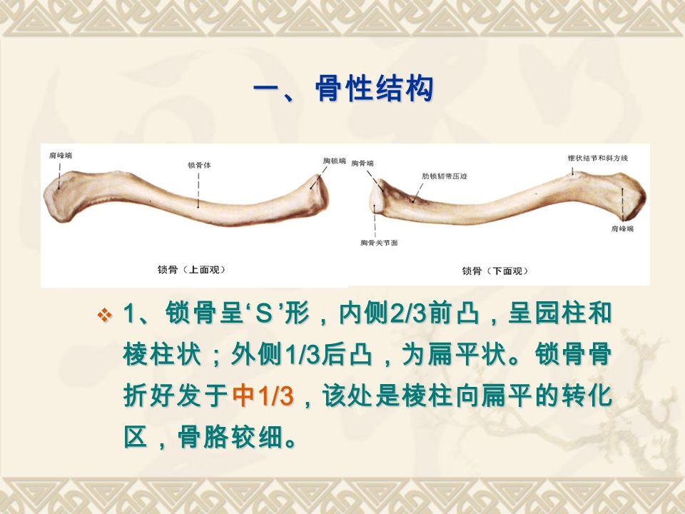 一、骨性结构  1 、锁骨呈 ' S ' 形,内侧 2/3 前凸,呈园柱和 棱柱状;外侧 1/3 后凸,为扁平状。锁骨骨 折好发于中 1/3 ,该处是棱柱向扁平的转化 区,骨胳较细。