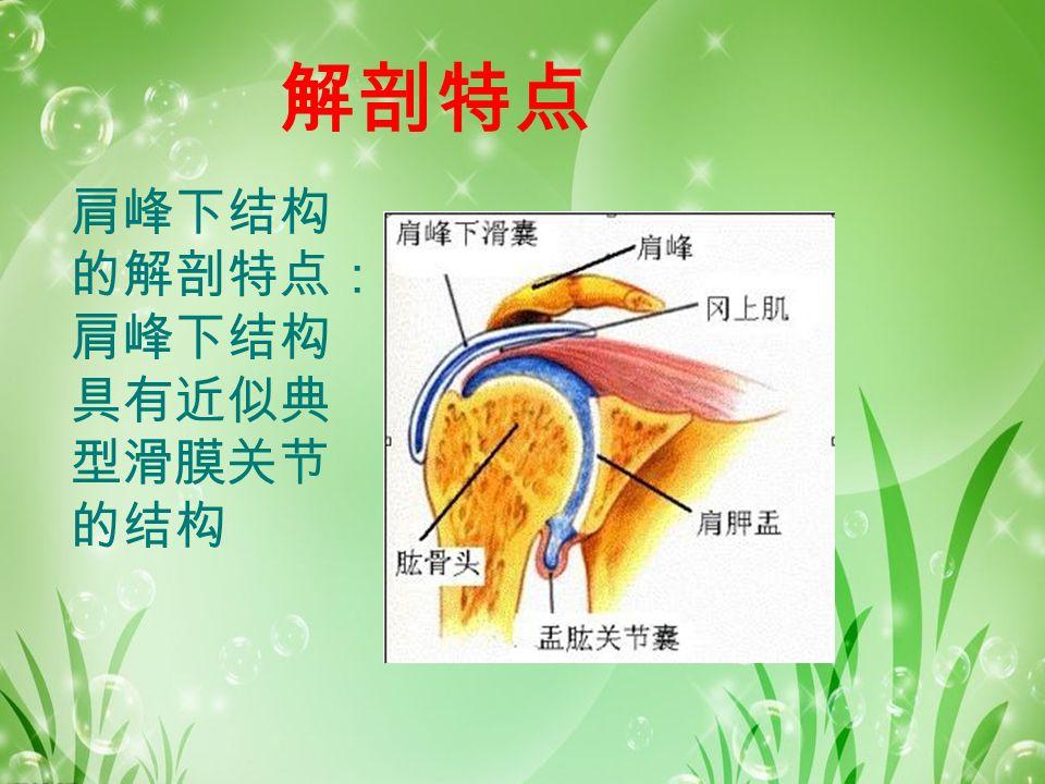 解剖特点 肩峰下结构 的解剖特点: 肩峰下结构 具有近似典 型滑膜关节 的结构