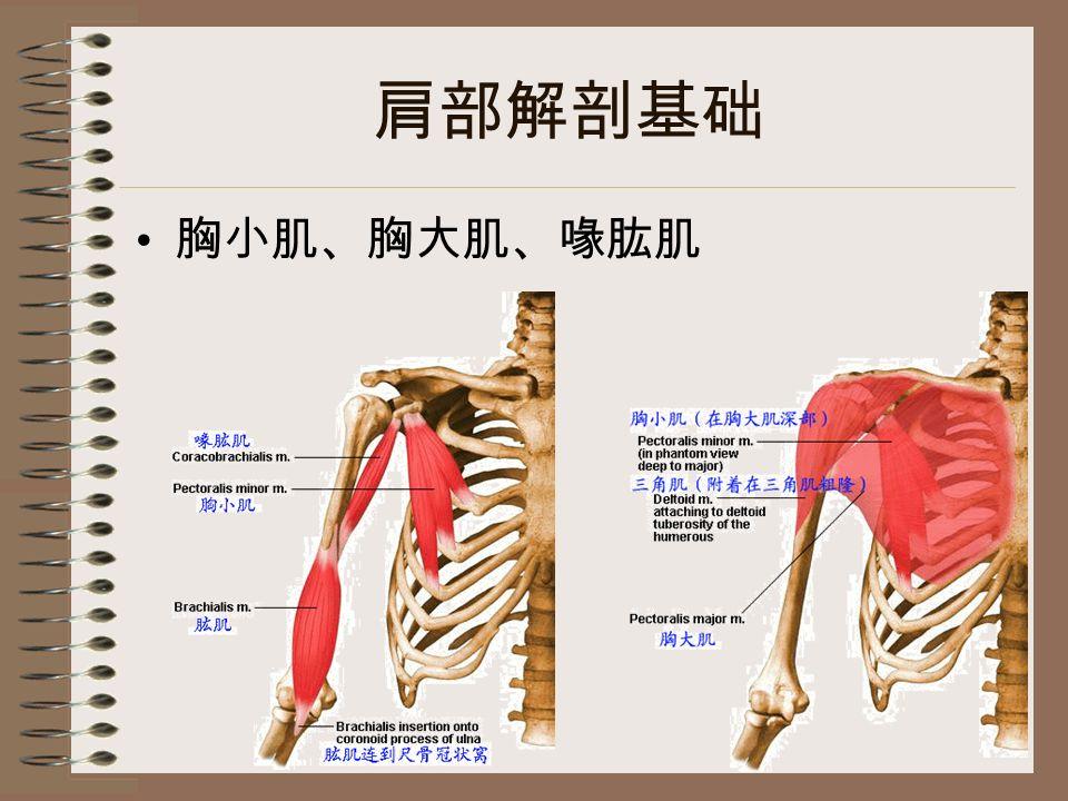 肩部解剖基础 胸小肌、胸大肌、喙肱肌