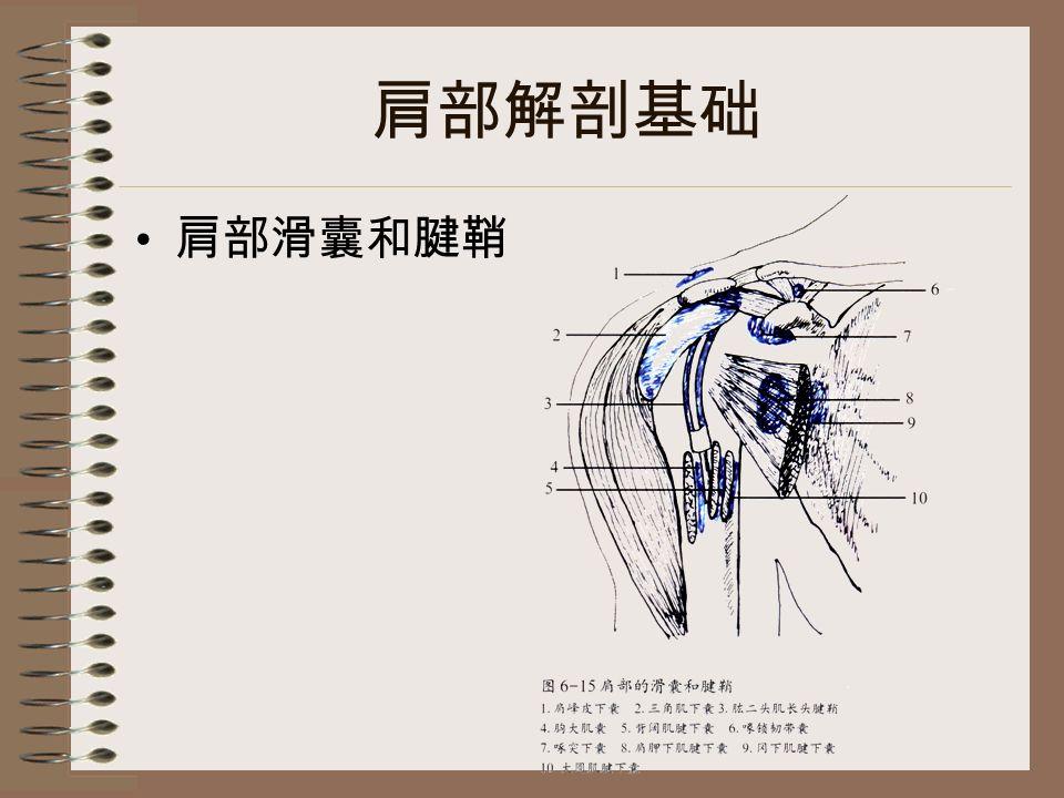 肩部解剖基础 肩部滑囊和腱鞘