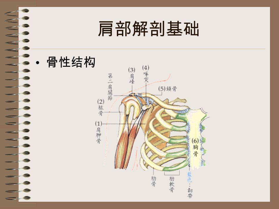 肩部解剖基础 骨性结构
