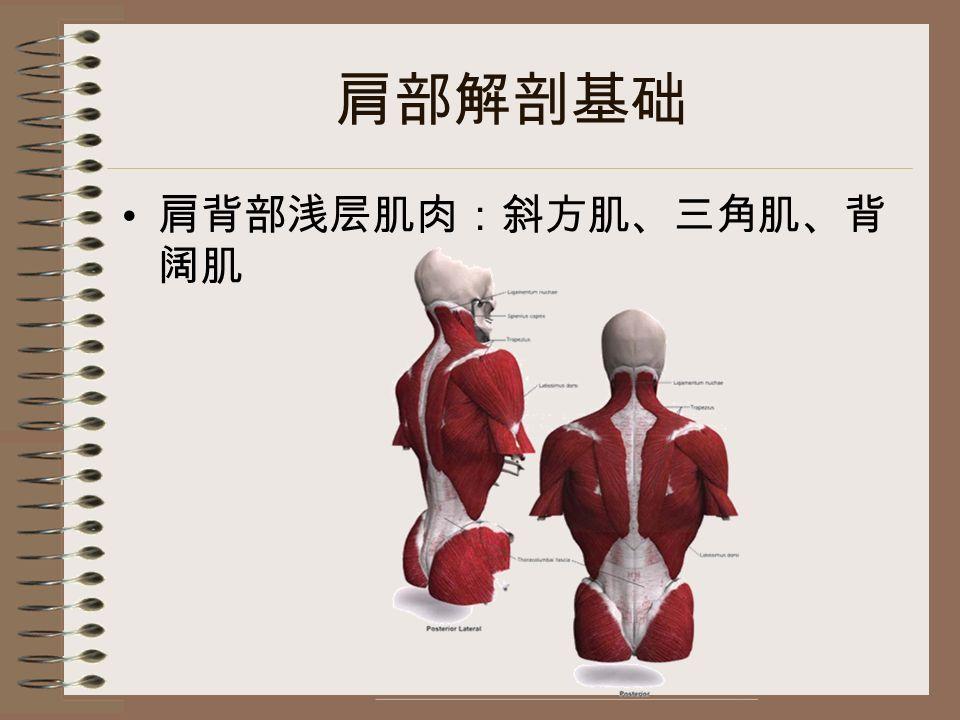 肩部解剖基础 肩背部浅层肌肉:斜方肌、三角肌、背 阔肌