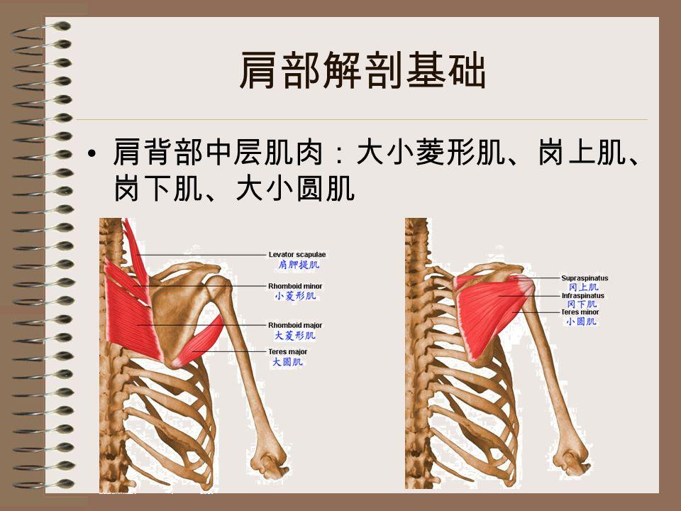肩部解剖基础 肩背部中层肌肉:大小菱形肌、岗上肌、 岗下肌、大小圆肌