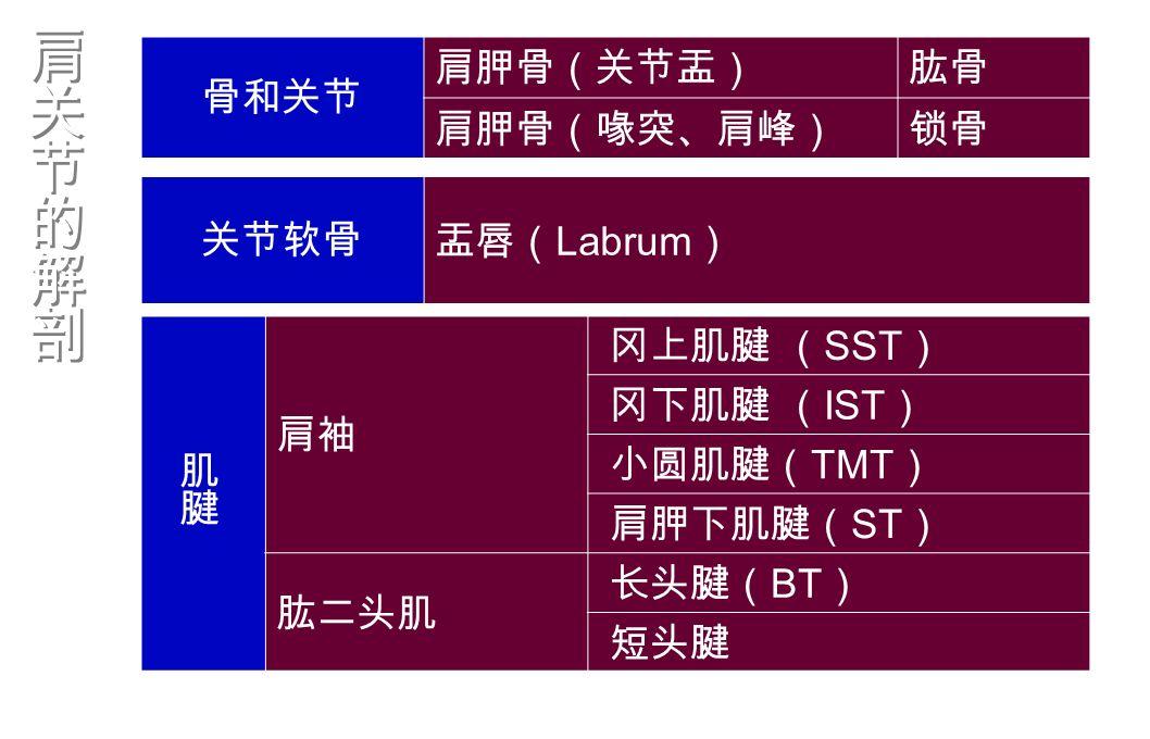 肩袖 冈上肌腱 ( SST ) 冈下肌腱 ( IST ) 小圆肌腱( TMT ) 肩胛下肌腱( ST ) 肱二头肌 长头腱( BT ) 短头腱 骨和关节 肩胛骨(关节盂)肱骨 肩胛骨(喙突、肩峰)锁骨 关节软骨盂唇( Labrum )