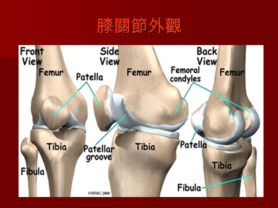 膝關節外觀