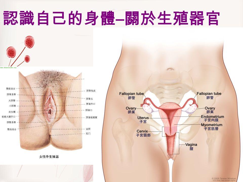 認識自己的身體 – 關於生殖器官