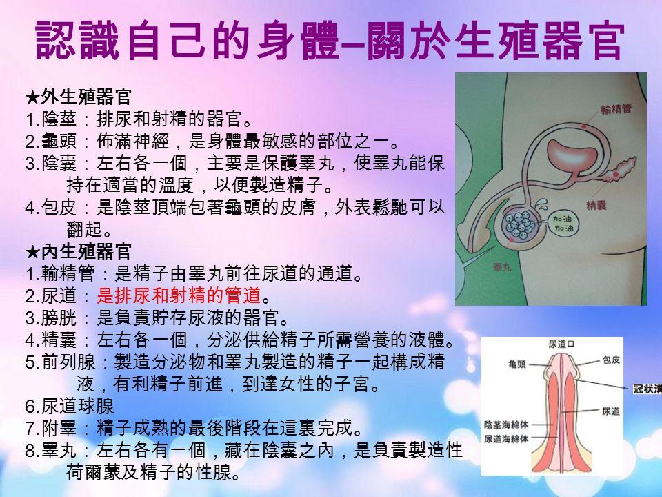 認識自己的身體 – 關於生殖器官 ★外生殖器官 1. 陰莖:排尿和射精的器官。 2. 龜頭:佈滿神經,是身體最敏感的部位之一。 3.