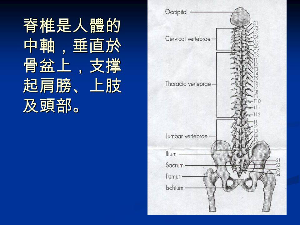 保健脊椎的重要性