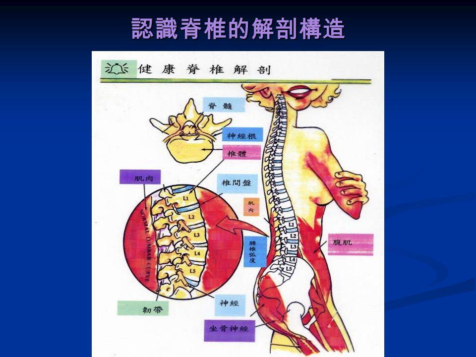 人體的脊椎,是 由 7 節頸椎、 12 節胸椎、 5 節腰椎、 薦椎、尾椎連接 而成,椎骨與椎 骨之間,就有一 個椎間盤夾在其 中。 人體的脊椎,是 由 7 節頸椎、 12 節胸椎、 5 節腰椎、 薦椎、尾椎連接 而成,椎骨與椎 骨之間,就有一 個椎間盤夾在其 中。