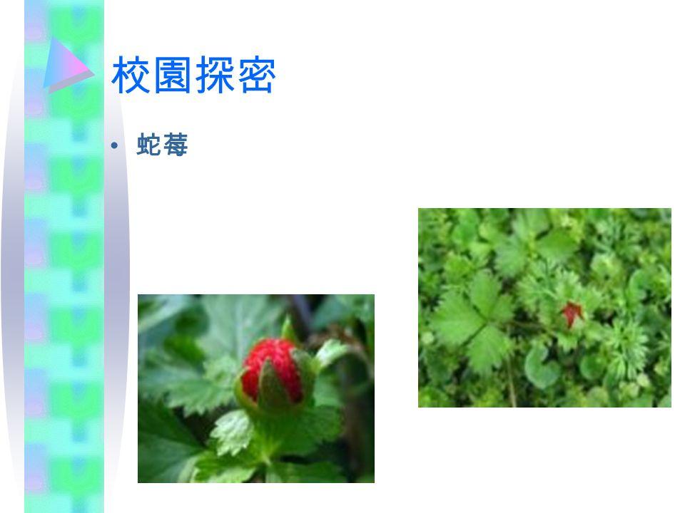 校園探密 蛇莓
