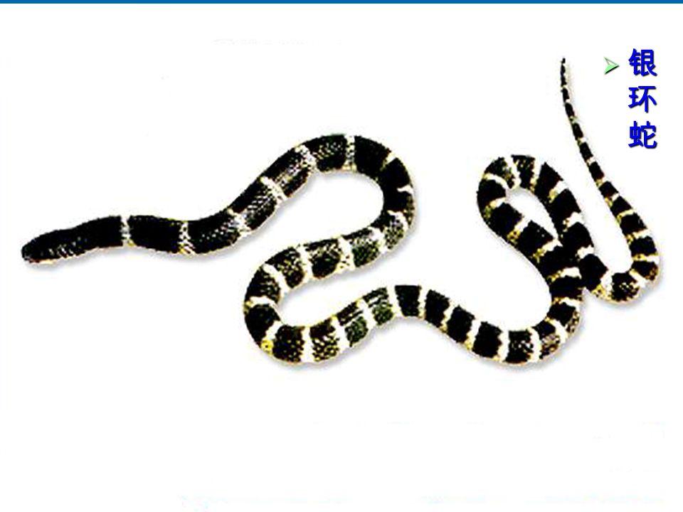 17 银环蛇银环蛇银环蛇银环蛇