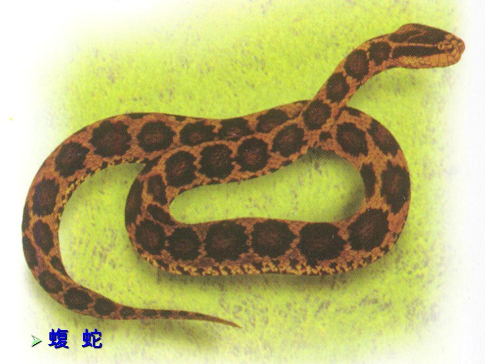 22  蝮 蛇