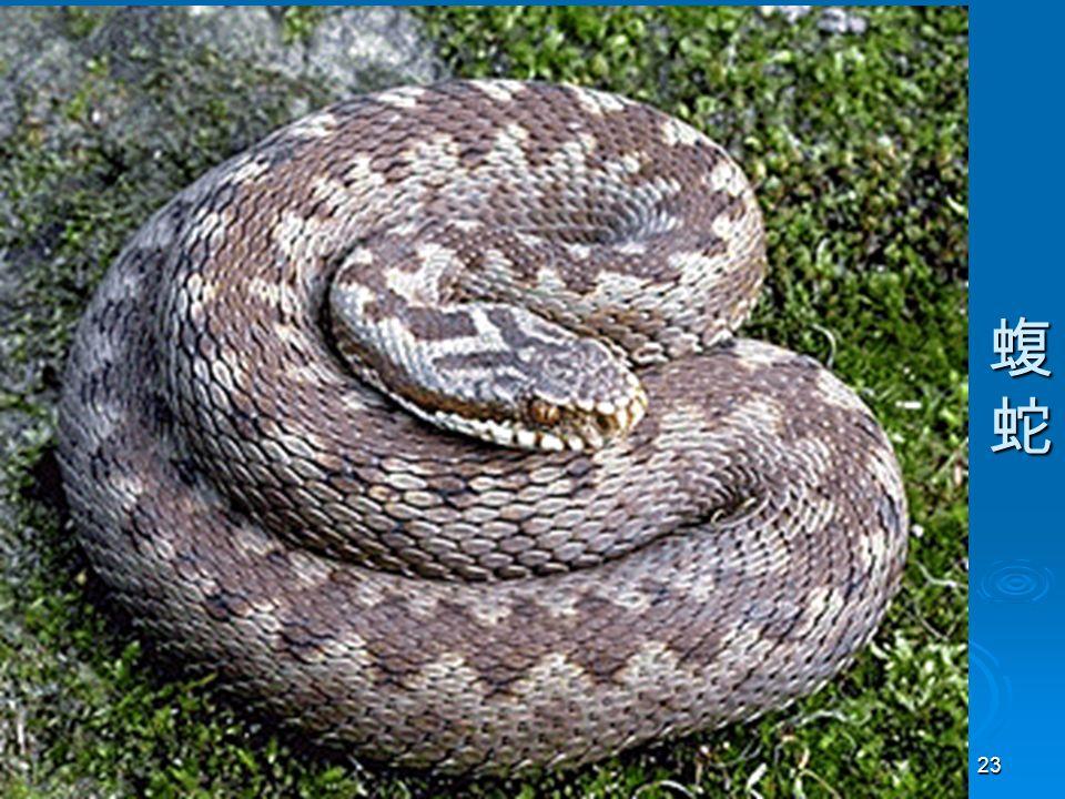 23 蝮蛇蝮蛇蝮蛇蝮蛇