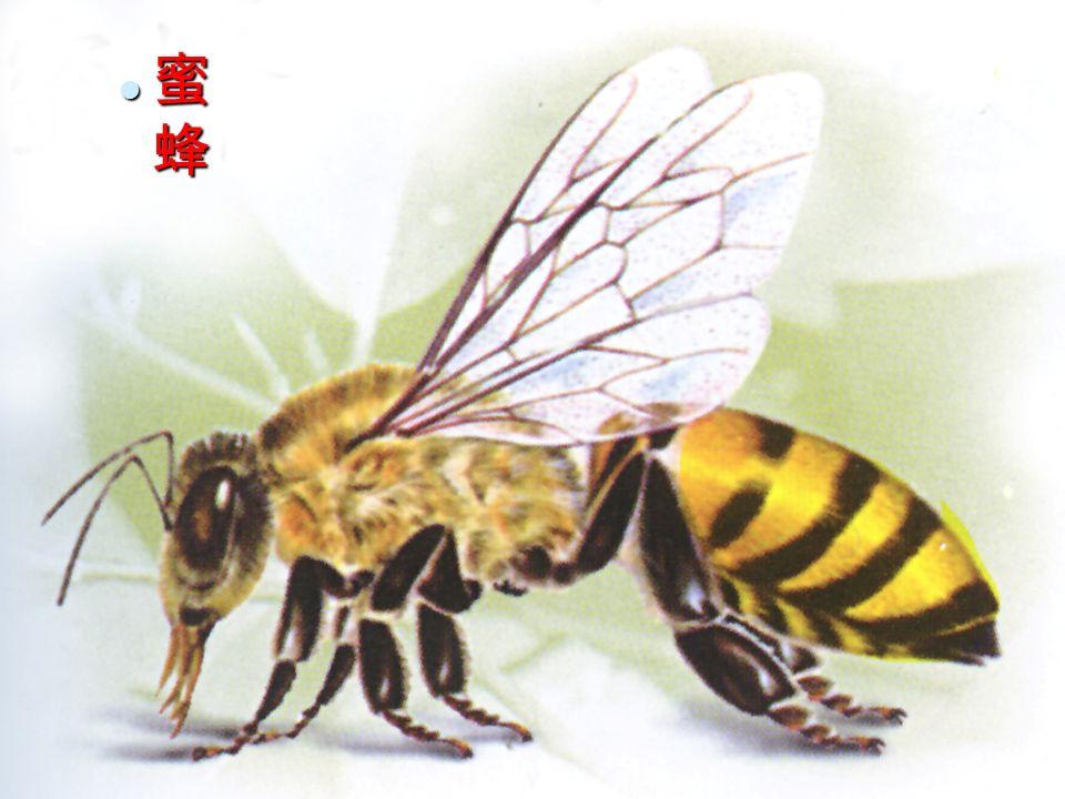 28 蜜 蜂 蜜 蜂