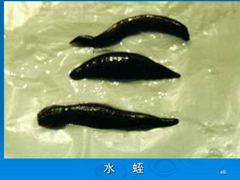 49 水 蛭 水 蛭