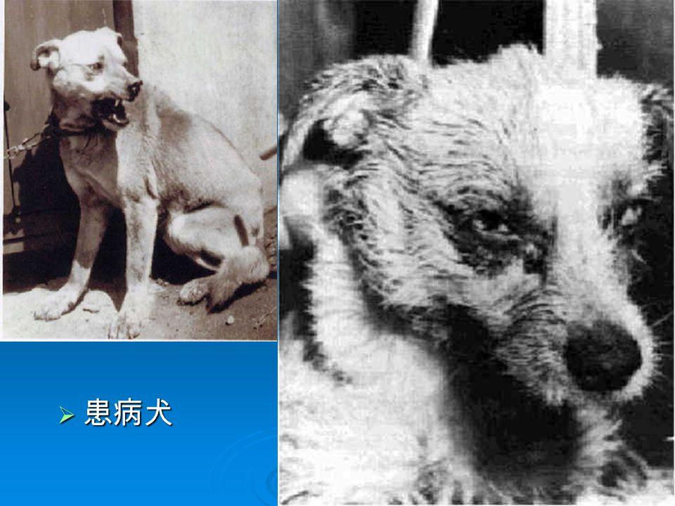 5  患病犬