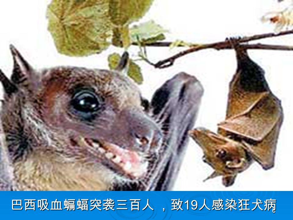 6 巴西吸血蝙蝠突袭三百人 ,致 19 人感染狂犬病 巴西吸血蝙蝠突袭三百人 ,致 19 人感染狂犬病