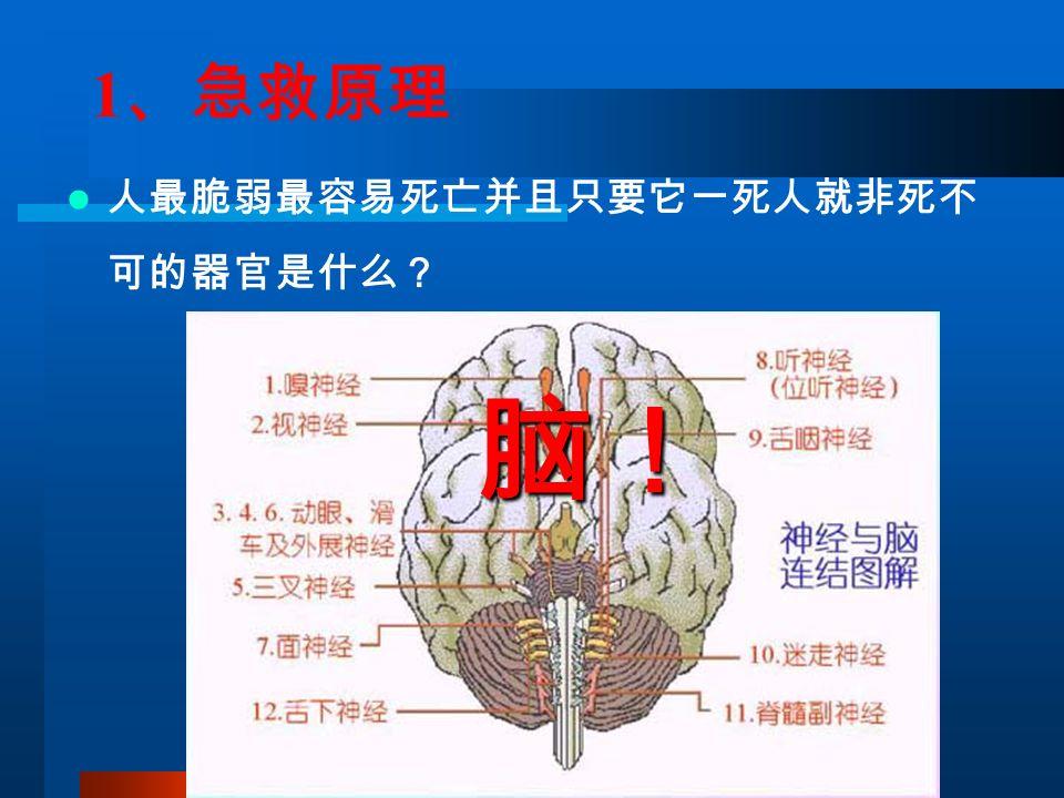 1 、急救原理 人最脆弱最容易死亡并且只要它一死人就非死不 可的器官是什么? 脑!