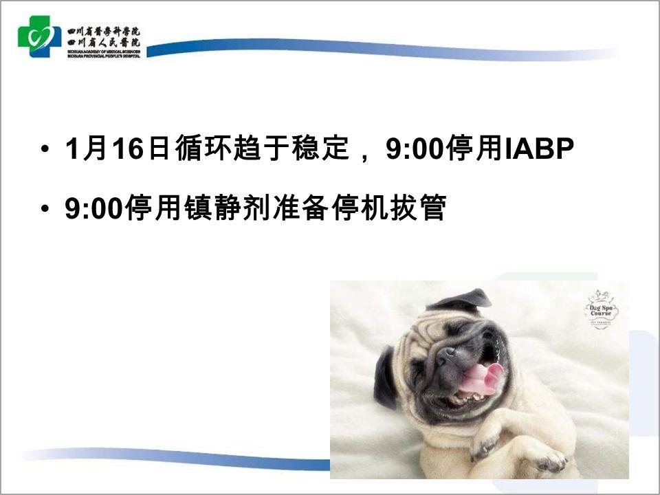 1 月 16 日循环趋于稳定, 9:00 停用 IABP 9:00 停用镇静剂准备停机拔管