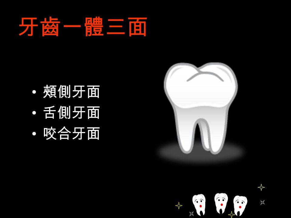 牙齒一體三面 頰側牙面 舌側牙面 咬合牙面