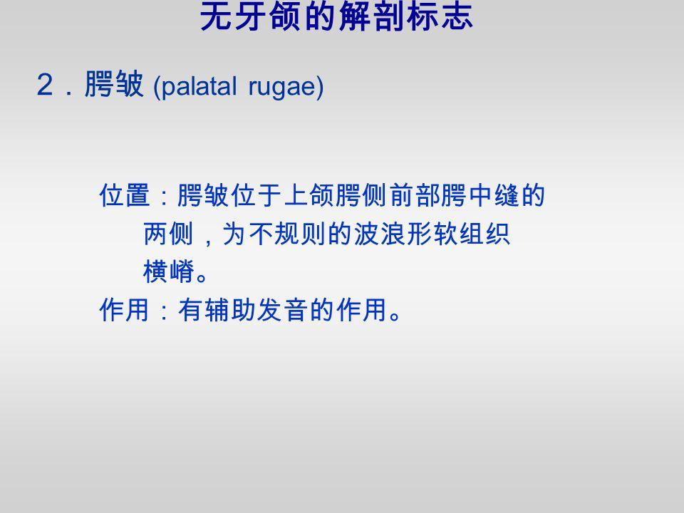 位置:腭皱位于上颌腭侧前部腭中缝的 两侧,为不规则的波浪形软组织 横嵴。 作用:有辅助发音的作用。 2 .腭皱 (palatal rugae) 无牙颌的解剖标志
