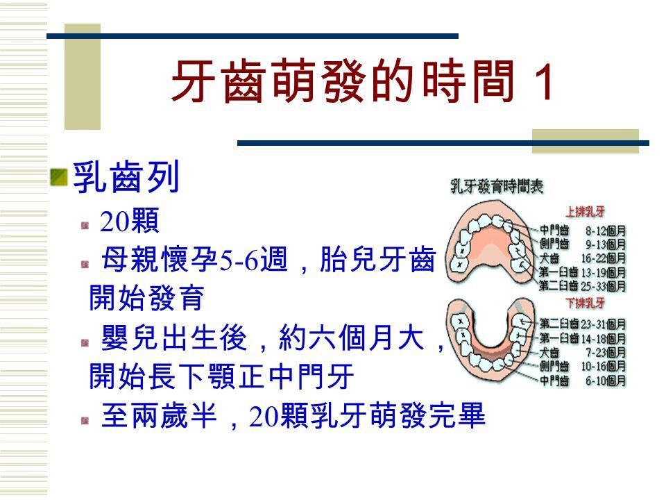 牙齒萌發的時間1 乳齒列 20 顆 母親懷孕 5-6 週,胎兒牙齒 開始發育 嬰兒出生後,約六個月大, 開始長下顎正中門牙 至兩歲半, 20 顆乳牙萌發完畢