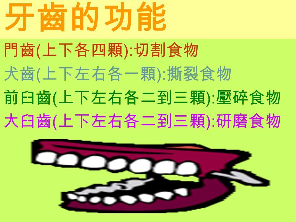 牙齒的功能 門齒 ( 上下各四顆 ): 切割食物 犬齒 ( 上下左右各一顆 ): 撕裂食物 前臼齒 ( 上下左右各二到三顆 ): 壓碎食物 大臼齒 ( 上下左右各二到三顆 ): 研磨食物