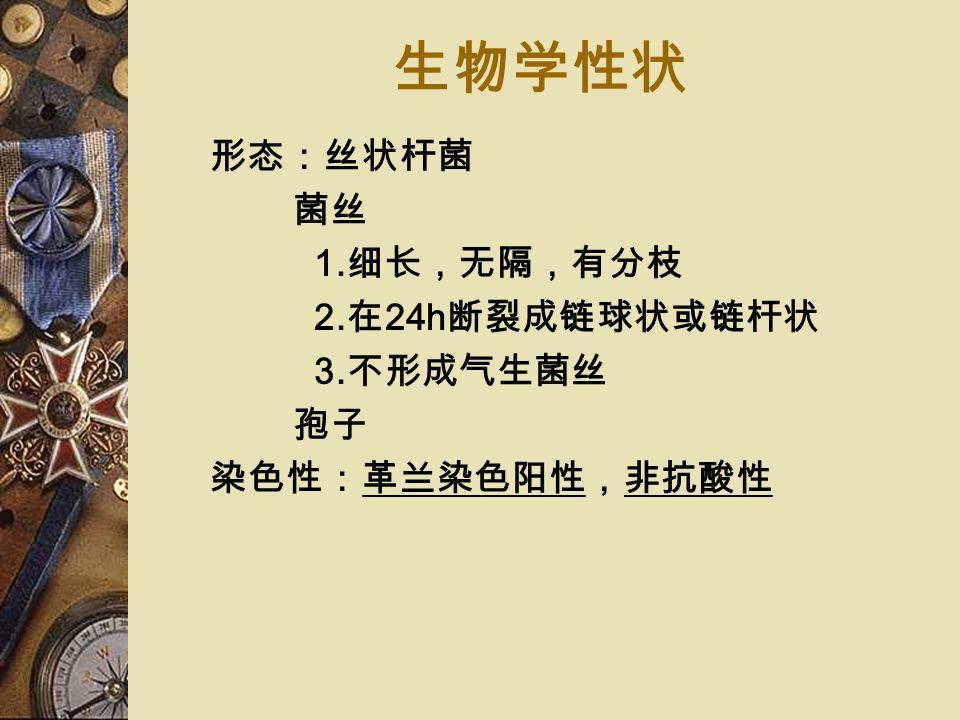放线菌属 多数:腐生菌(土壤) 少数:寄生菌(人类和动物口腔、上呼 吸道、胃肠道和泌尿生殖道) 致病菌: 牛放线菌( A.