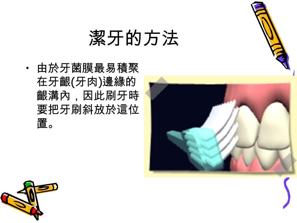 潔牙的方法 由於牙菌膜最易積聚 在牙齦 ( 牙肉 ) 邊緣的 齦溝內,因此刷牙時 要把牙刷斜放於這位 置。