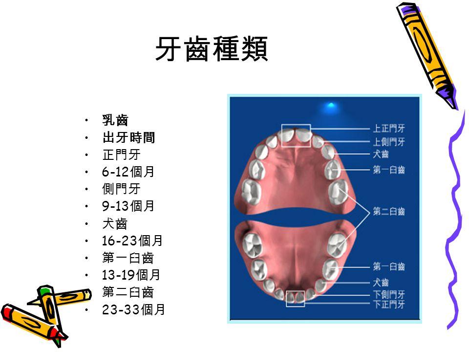 牙齒種類 乳齒 出牙時間 正門牙 6-12 個月 側門牙 9-13 個月 犬齒 16-23 個月 第一臼齒 13-19 個月 第二臼齒 23-33 個月