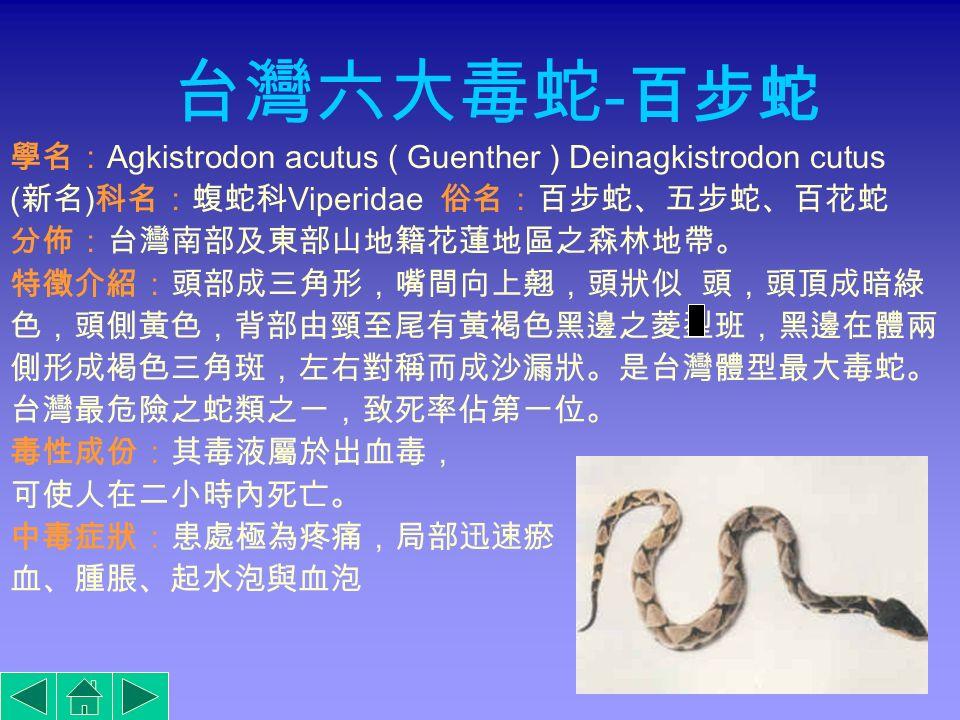 百步蛇青竹絲雨傘節 鎖鏈蛇 眼鏡蛇 龜殼花
