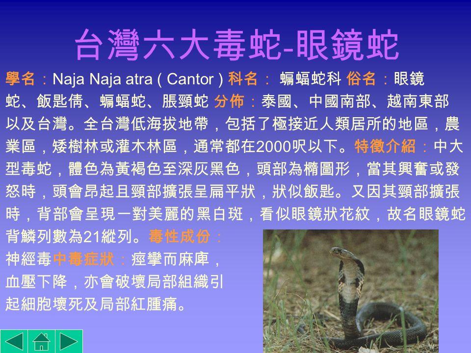 台灣六大毒蛇 - 鎖鏈蛇 學名: Vipera russelli formosensis 科名: 蝮蛇科 俗名:鎖 蛇、鎖鏈蛇、七步蛇、七步紅、鎖仔蛇、鏈仔蛇 分佈:台灣中 央 山脈南段及東側,出現在屏東、花蓮、台東、高雄等中低山 林、草叢及甘蔗園。特徵介紹:頭部成三角形,背面為淡灰褐色, 有三條縱列暗色或深褐色橢圓形斑紋,全身有如圓形鐵鍊相接之 環紋,在石礫中不易辨認,也常被誤認為龜殼花。較少見。毒性 成份:出血毒、神經毒。 ( 兩種毒混合 ) 中毒症狀:鎖鏈蛇分泌的蛇毒很複雜 ,咬後局部會瘀血、腫脹,少數有水 泡、血泡,全身性的出血症狀,包括 器官出血、皮下多處瘀血及紫斑,程 度類似龜殼花。