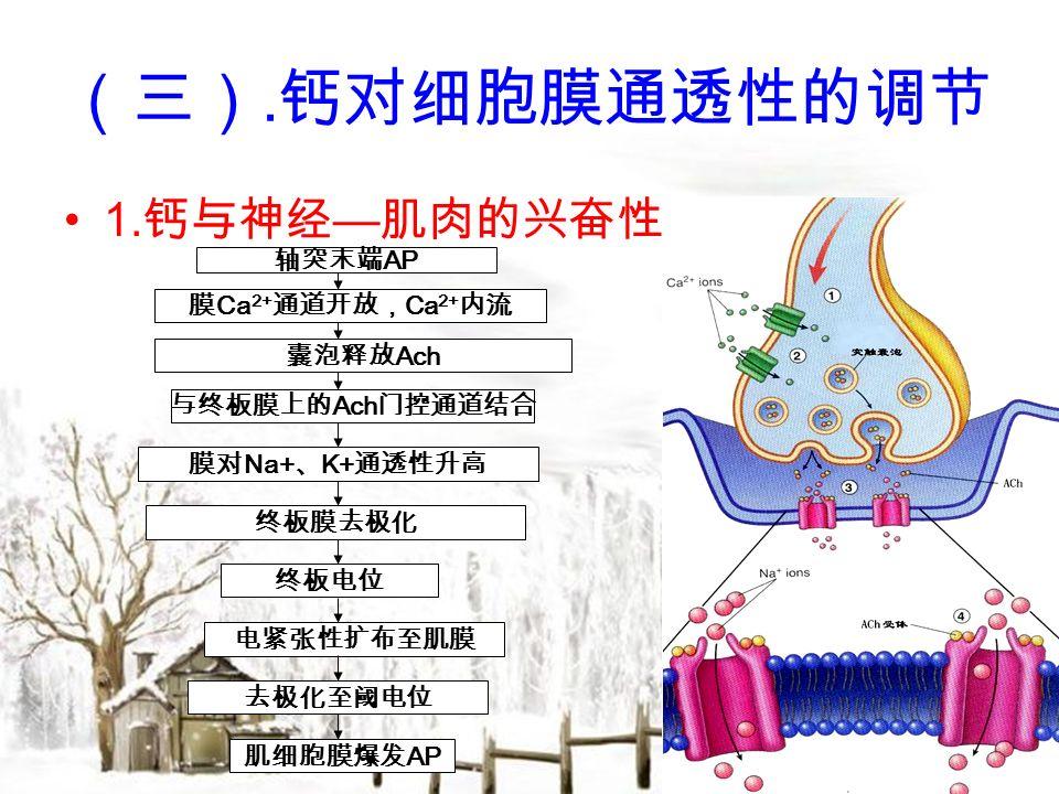 (三). 钙对细胞膜通透性的调节 1.