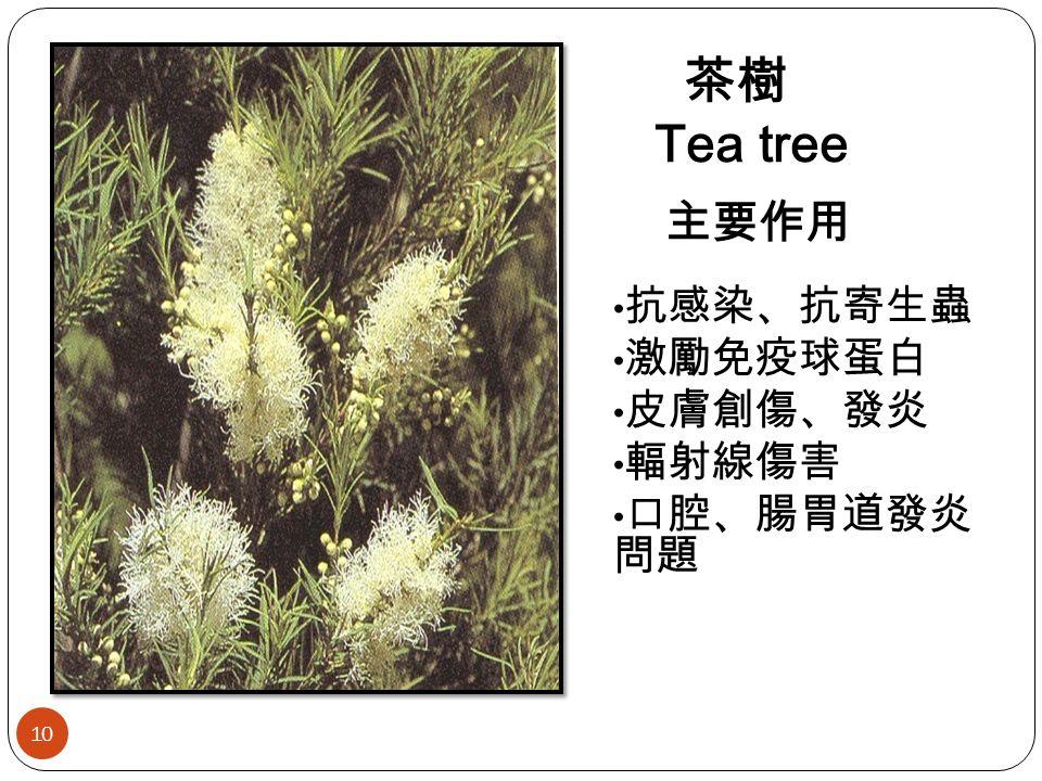 茶樹 Tea tree 主要作用 抗感染、抗寄生蟲 激勵免疫球蛋白 皮膚創傷、發炎 輻射線傷害 口腔、腸胃道發炎 問題 10