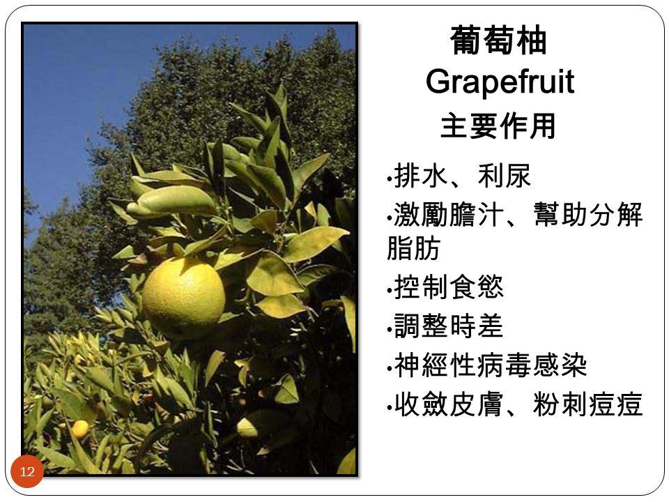 葡萄柚 Grapefruit 主要作用 排水、利尿 激勵膽汁、幫助分解 脂肪 控制食慾 調整時差 神經性病毒感染 收斂皮膚、粉刺痘痘 12