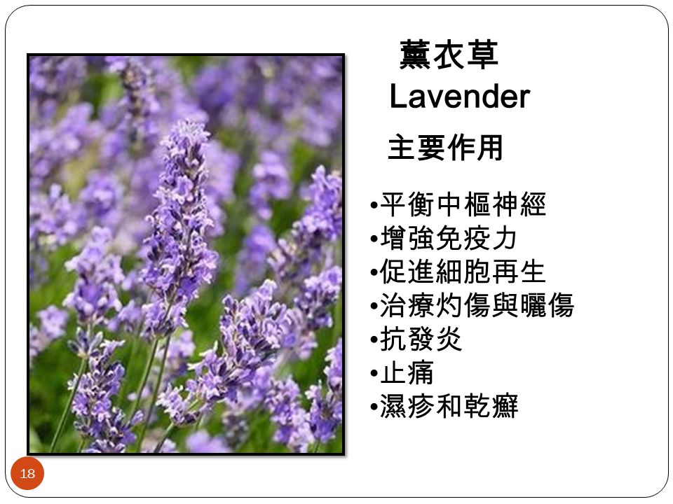 薰衣草 Lavender 主要作用 平衡中樞神經 增強免疫力 促進細胞再生 治療灼傷與曬傷 抗發炎 止痛 濕疹和乾癬 18