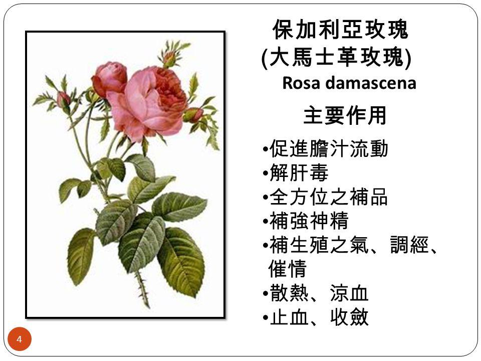 保加利亞玫瑰 ( 大馬士革玫瑰 ) Rosa damascena 主要作用 促進膽汁流動 解肝毒 全方位之補品 補強神精 補生殖之氣、調經、 催情 散熱、涼血 止血、收斂 4