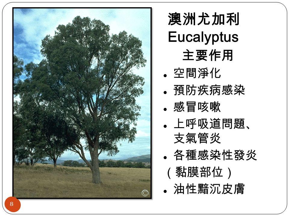 澳洲尤加利 Eucalyptus 主要作用 空間淨化 預防疾病感染 感冒咳嗽 上呼吸道問題、 支氣管炎 各種感染性發炎 (黏膜部位) 油性黯沉皮膚 8 8