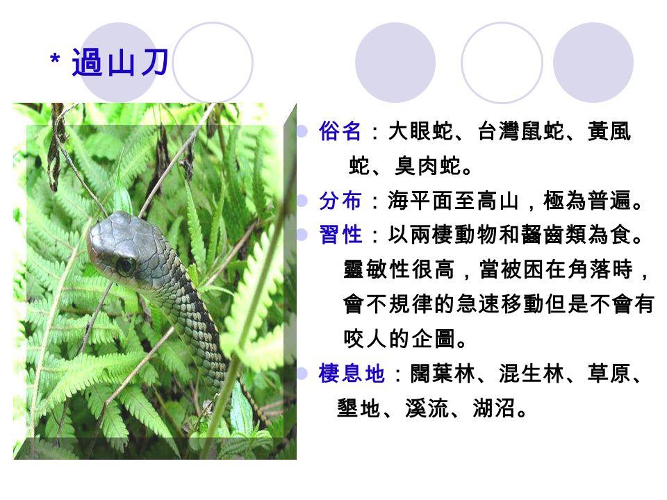 * 過山刀 俗名:大眼蛇、台灣鼠蛇、黃風 蛇、臭肉蛇。 分布:海平面至高山,極為普遍。 習性:以兩棲動物和齧齒類為食。 靈敏性很高,當被困在角落時, 會不規律的急速移動但是不會有 咬人的企圖。 棲息地:闊葉林、混生林、草原、 墾地、溪流、湖沼。