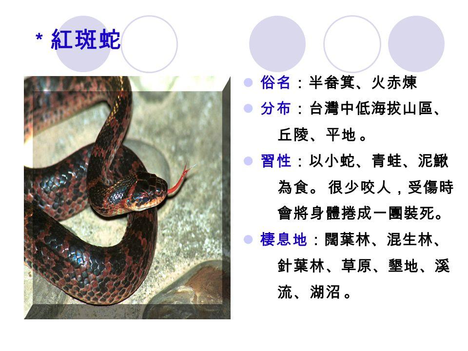 * 紅斑蛇 俗名:半畚箕、火赤煉 分布:台灣中低海拔山區、 丘陵、平地 。 習性:以小蛇、青蛙、泥鰍 為食。 很少咬人,受傷時 會將身體捲成一團裝死。 棲息地:闊葉林、混生林、 針葉林、草原、墾地、溪 流、湖沼 。